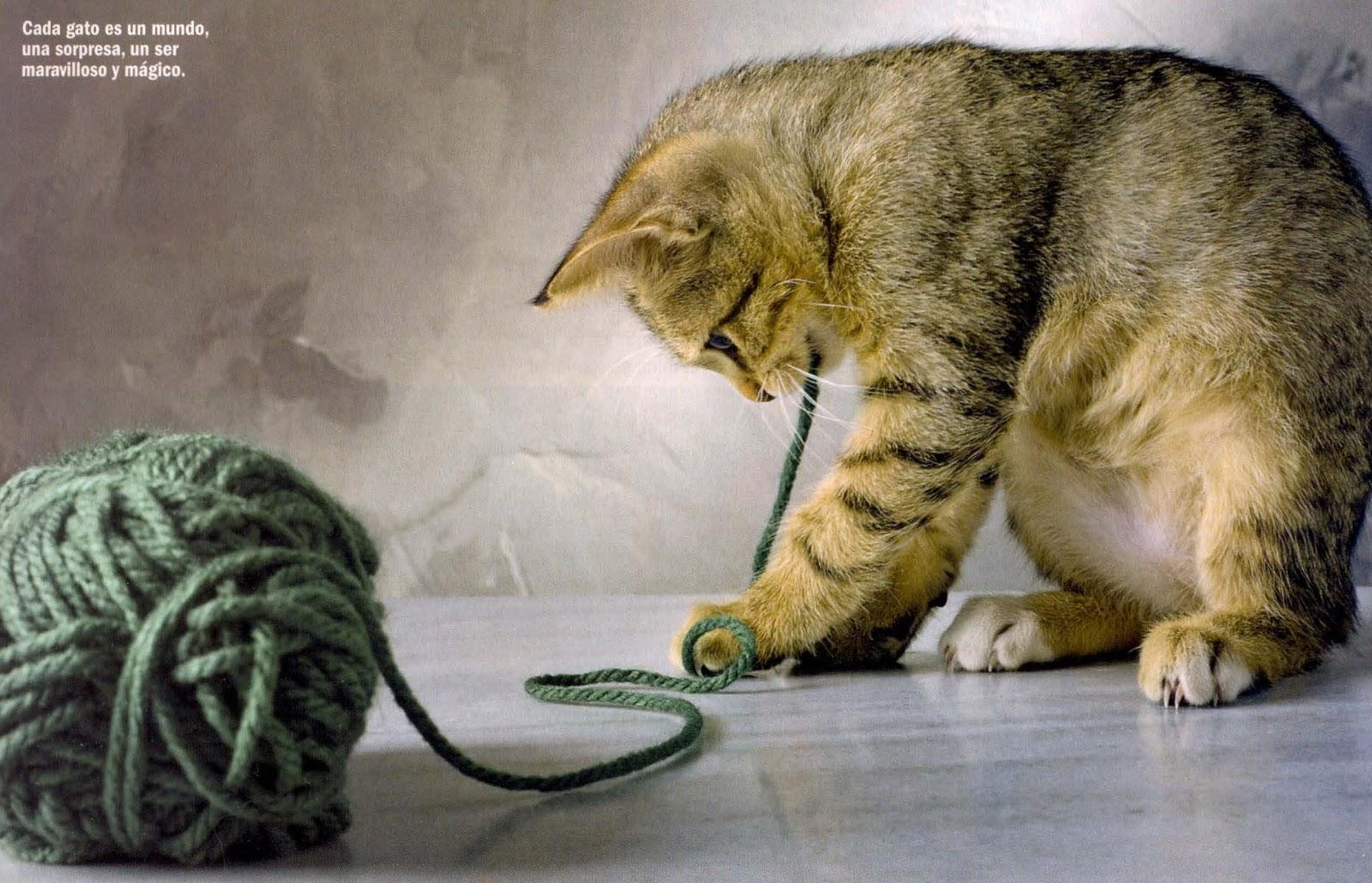Personalidades felinas el cuidado de tu gato - Cuidados gato 1 mes ...