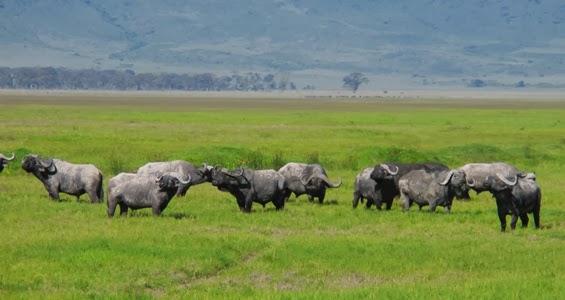 Ngorongoro Cratera