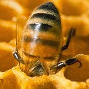 К чему снятся мед и пчелы?