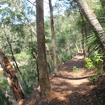 Along the Warrimoo Track (119164)