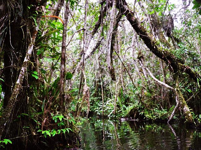 Anaconda Creek