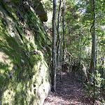 Walking along a mossy rock wall in Palm Grove NR (370051)