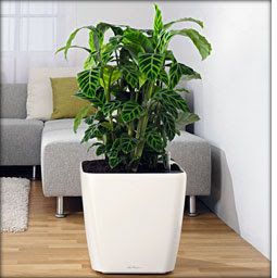 Quadro self-watering office planters by lechuza