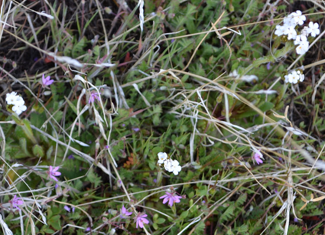 small white and purple petals unharmed by the blanket of the night before