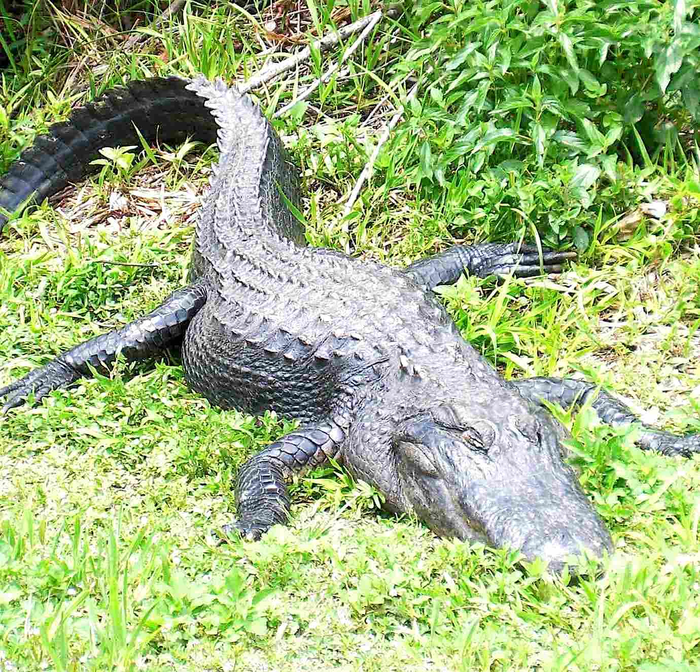 Best Airboat Tours Near Me