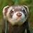 Alex Highland avatar image