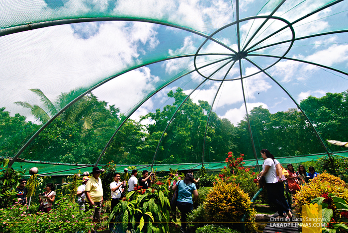 Butterfly Garden at Bicol's BacMan Geothermal Plant