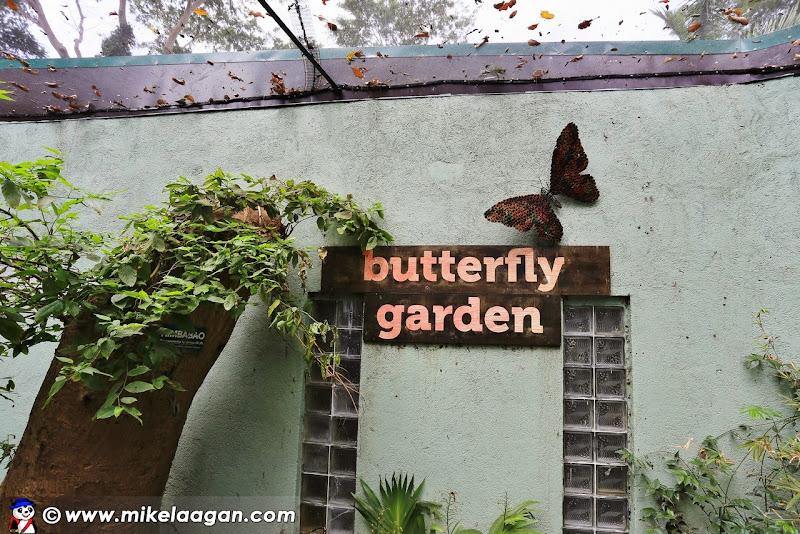 utterfly Garden