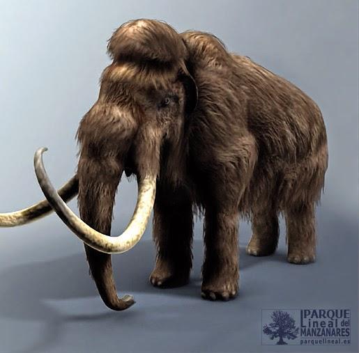 Imagen de un mamut, animal extinto adaptado al frío y que poblara los valles de Manzanares y Jarama durante los periodos glaciares. Fuente: Origenes, un viaje al pasado de Madrid.