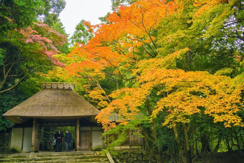 京都 紅葉 法然院 写真3