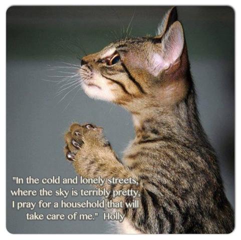 Singapore community cats a homeless cat s prayer