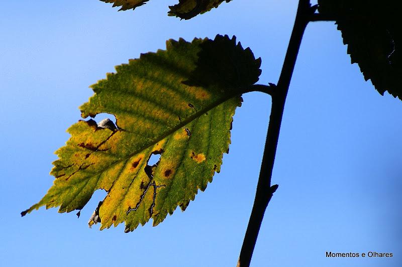 Detalhes do Outono