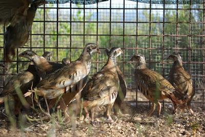Col·laboració Patronat Muntanya de Montserrat