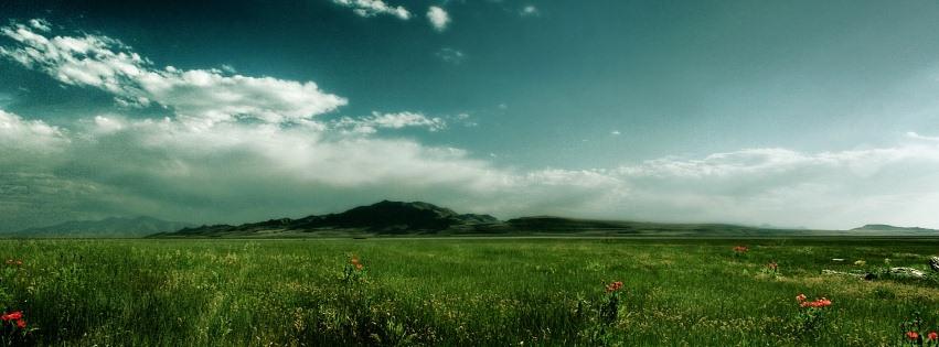 Çimenler ve mavi gökyüzü facebook kapak fotoğrafı
