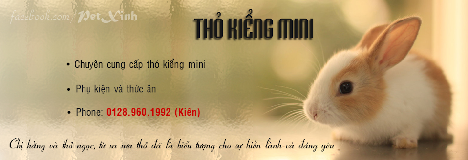 Thỏ Kiểng Mini