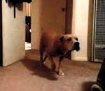 الكلب النينجا