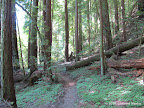 Buckeye Trail.