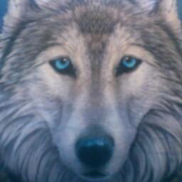Kyla Wolf