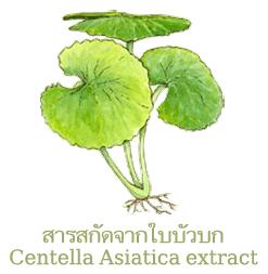 Centella-Asiatica-extract สารสกัดจากใบบัวบก