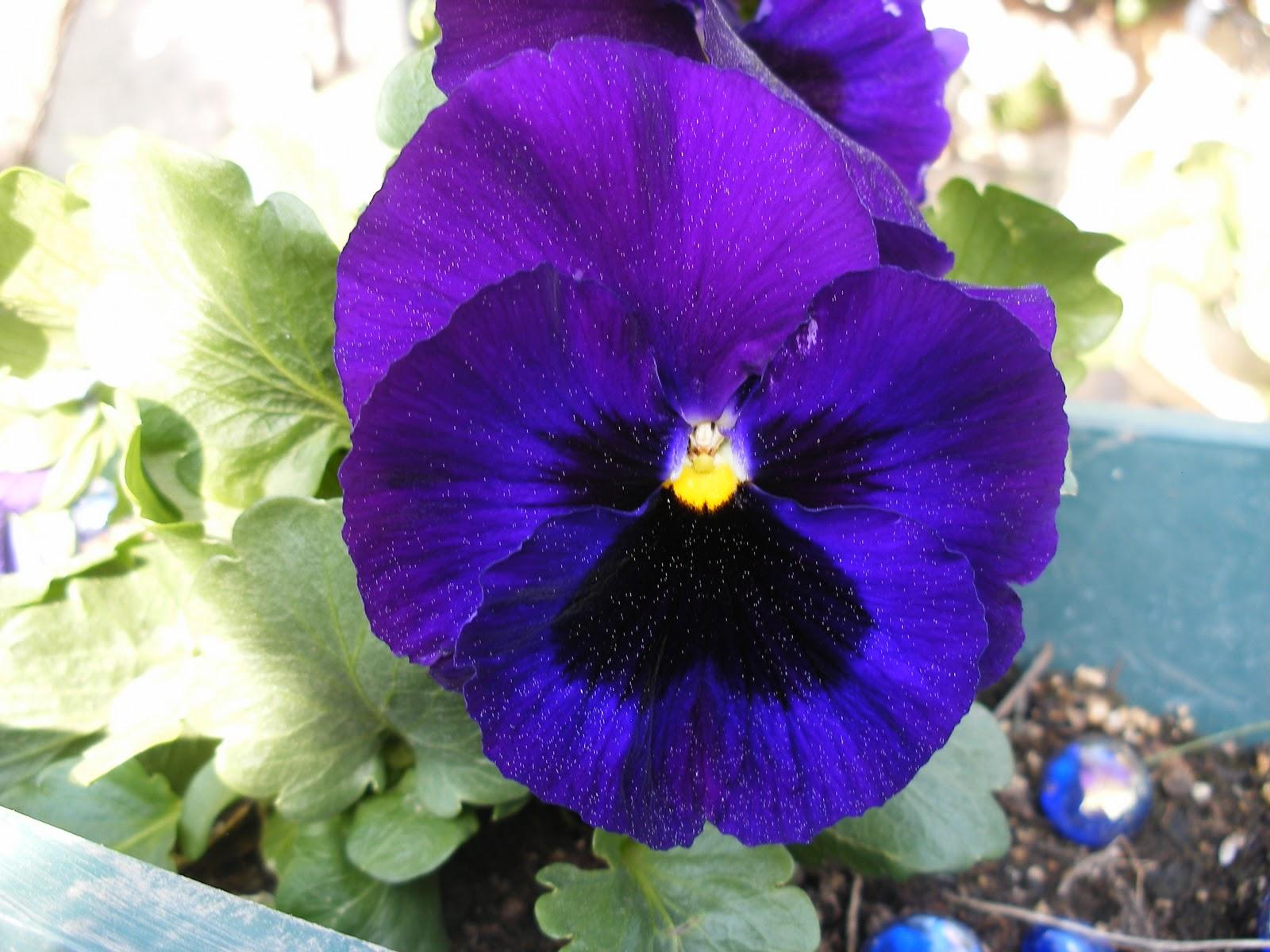 El huerto de ram n flores de plantas ornamentales for Plantas decorativas ornamentales