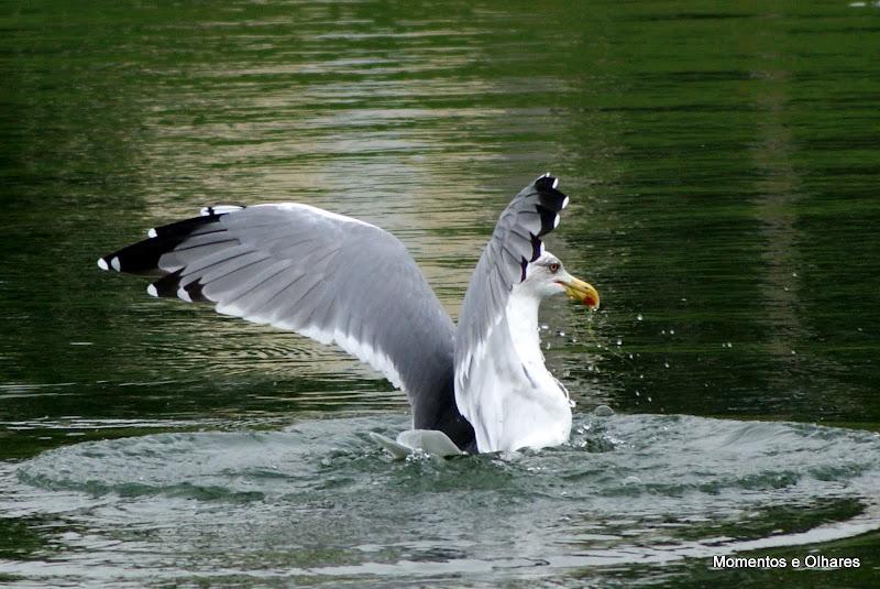 A gaivota e os peixinhos vermelhos