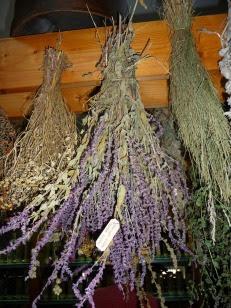 Suszenie szałwii lekarskiej Salvia officinalis drying