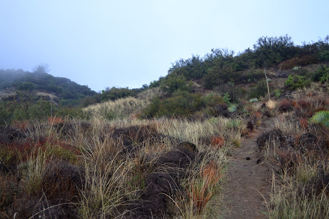 last bit of rolling hills