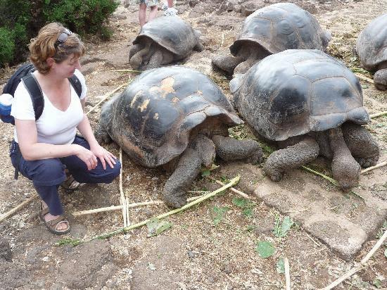 Tortoises in San Christine.