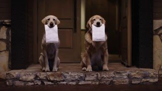 The Adorable Driving Dog Family Returns In New Commercials for Subaru