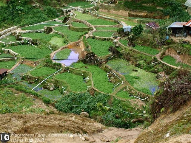 Vegetable Farms in Cameron Highlands picture cameron highlands escapade  photo