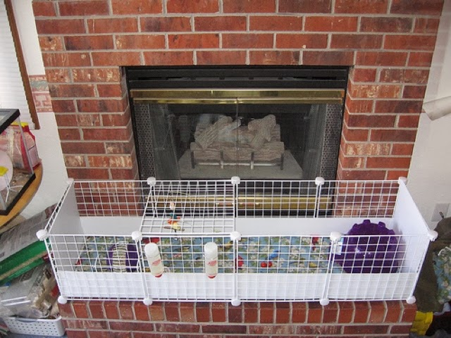 Critter corner guinea pig housing for How to clean guinea pig cages