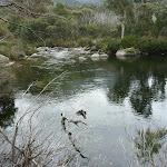 Threbo River beside Bullocks Track (296096)