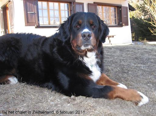 Zwitserland chalet  tuin 6feb2011.JPG