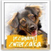 http://www.radiobielsko.pl/przygarnij-zwierzaka/strona-glowna - Tysiące zwierząt do adopcji