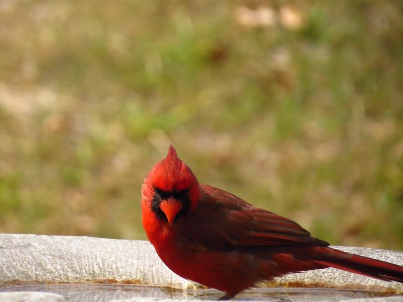 cardinal09162014.jpg