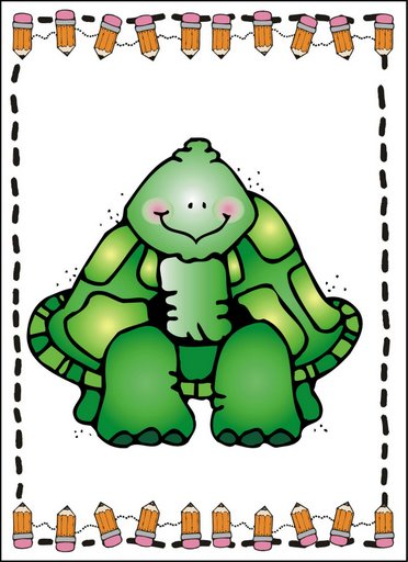 dji_turtle.jpg