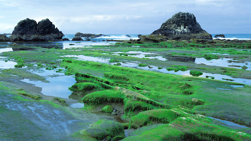 Low Tide, Seal Rock State Park, Seal Rock, Oregon.jpg