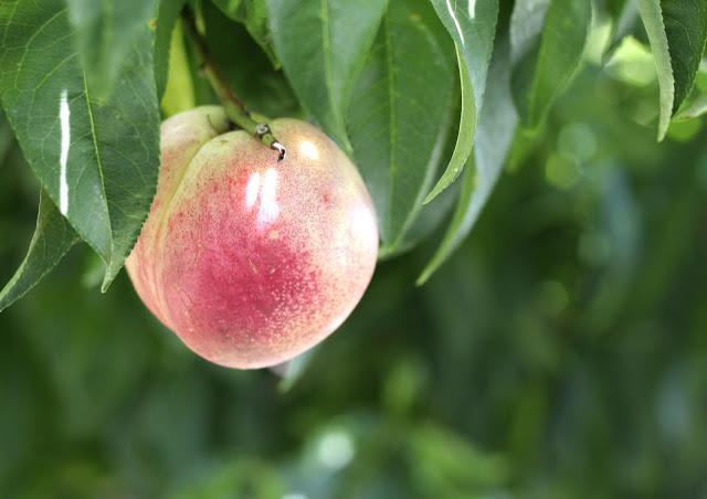 Foodjimoto Locally Grown Produce