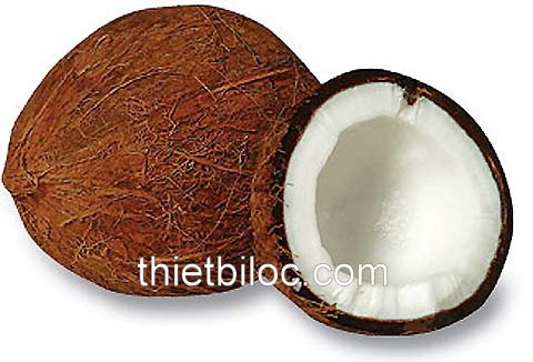 Coconut shell raw material