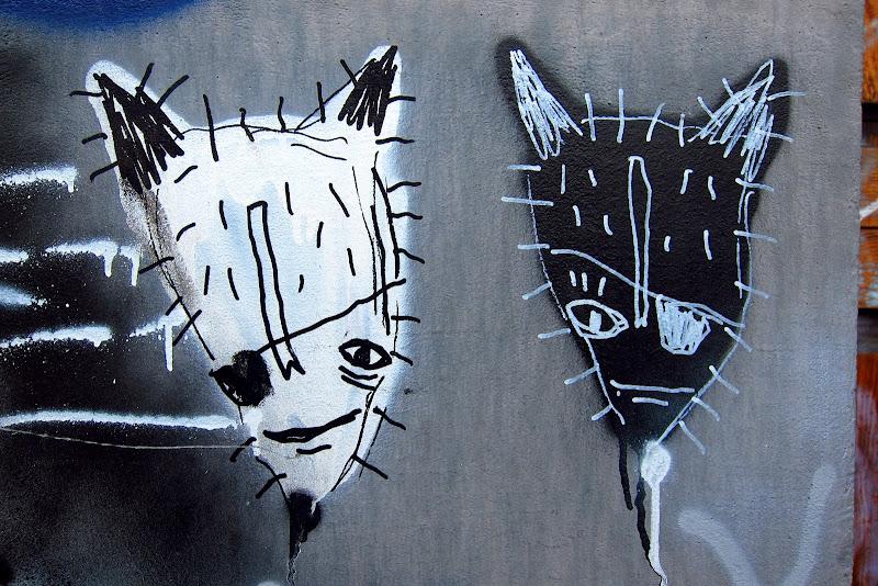 eyepatch kitties