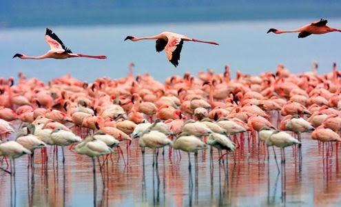 Lago Nakuru - Férias no Quénia