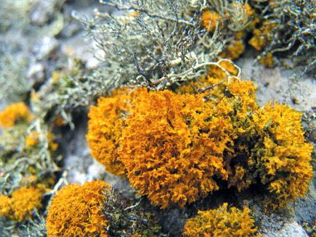 해안가 암반의 지의류