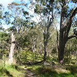 Open forest east of Megalong Rd (412409)