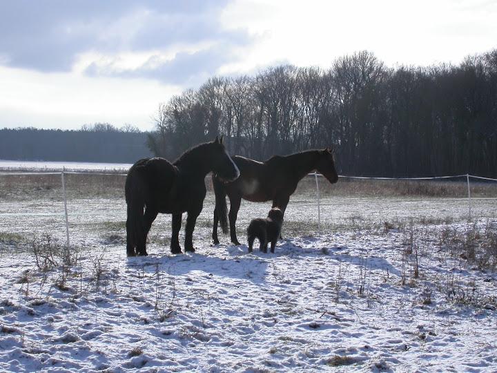 Concours Photos Décembre : Le Cheval et la Neige DSCN3632