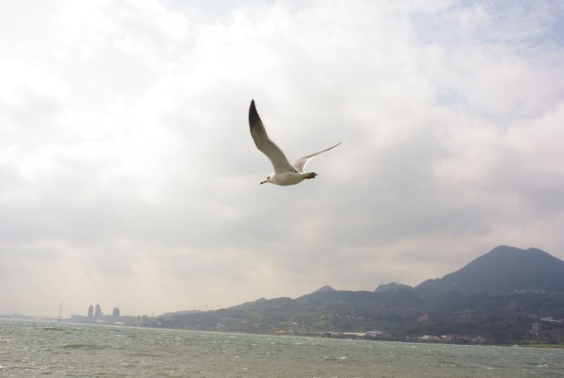 海邊巧遇海鷗 (MIRANDA 手動鏡)
