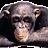 Russ Butler avatar image