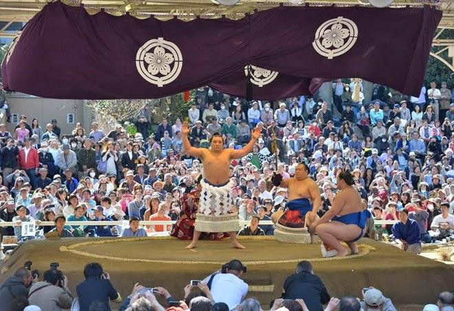 đấu sumo