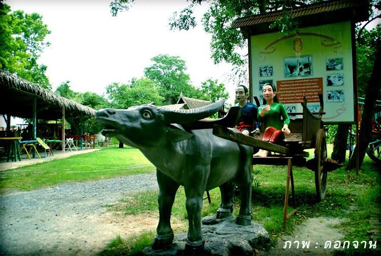 หมู่บ้านอนุรักษ์ควายไทย สุพรรณบุรี