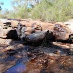 Rocky Ponds Tank Creek (200578)