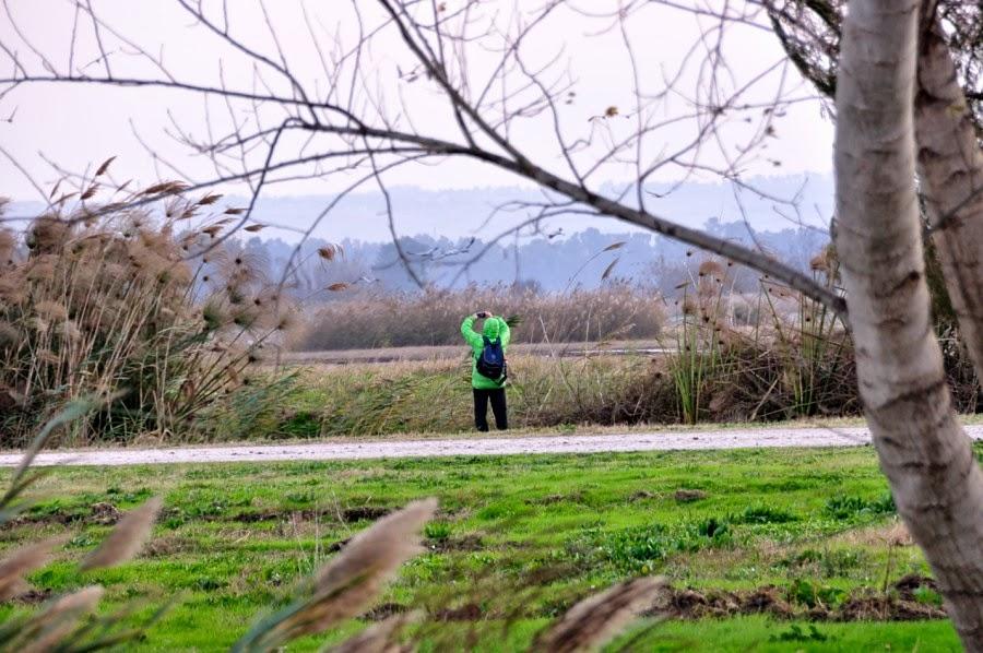 Экскурсия в заповедник Хула. Замечательное место для фотографирования птиц в дикой природе.